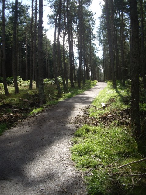 Cycle path through forest on Muckle Ord