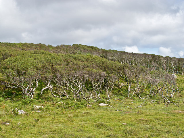 Woodland on the Ross of Mull