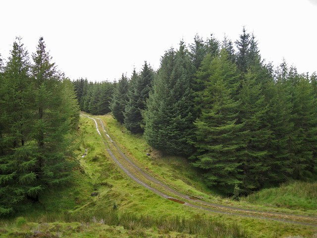 Track in Tungadal Forest