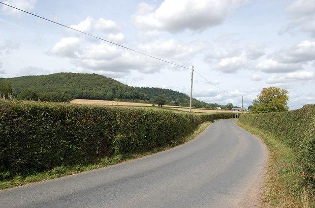 Lane from Tillington