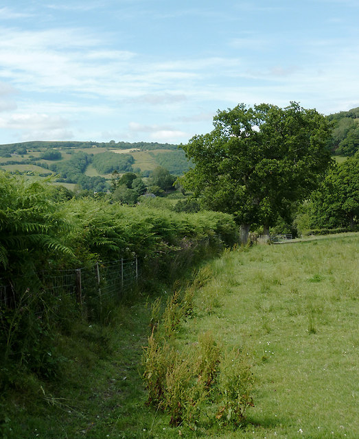 Hedge and pasture near Abermeurig, Ceredigion