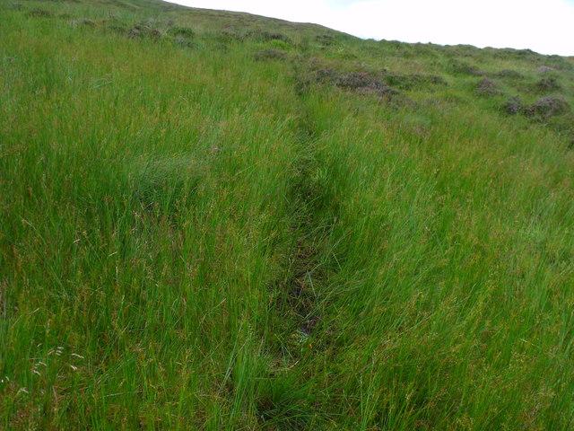 Animal track through boggy patch north of Beinn Bhreac near Aberfeldy
