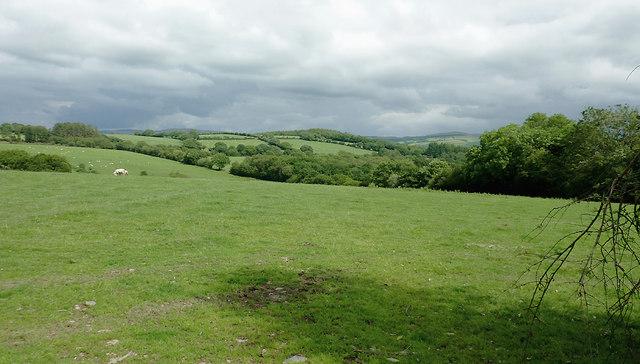 Pasture west of Cockshead, Ceredigion