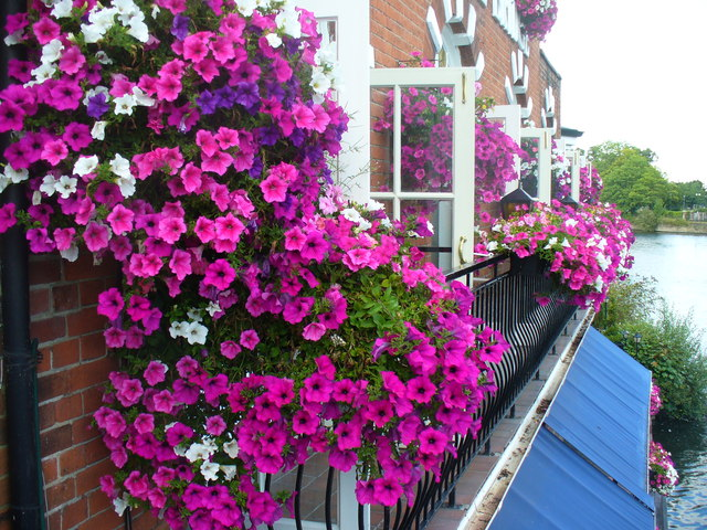 Eton in Bloom