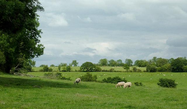Pasture north-west of Cockshead, Ceredigion