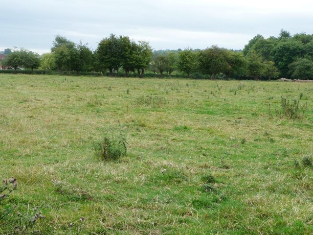 Rough pasture near Little Hereford