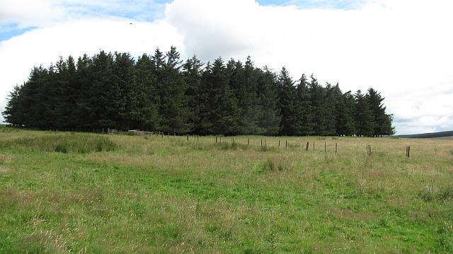 Woodland by Gairmuir