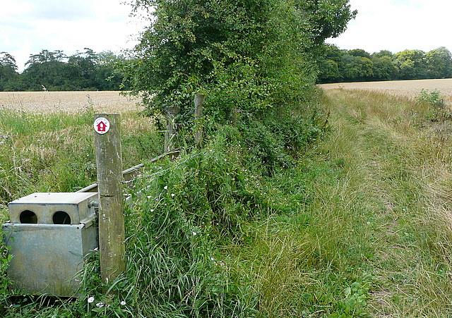 Walk on Hughenden estate