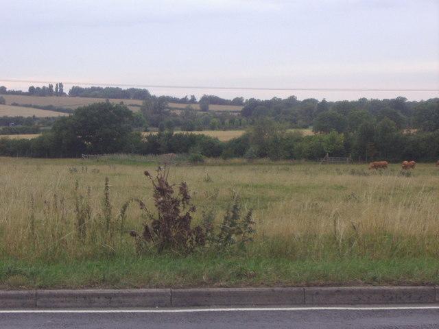 Fields by the A6, Silsoe