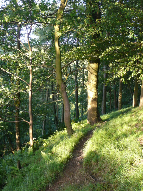 Path in the Catrigg Force woodland