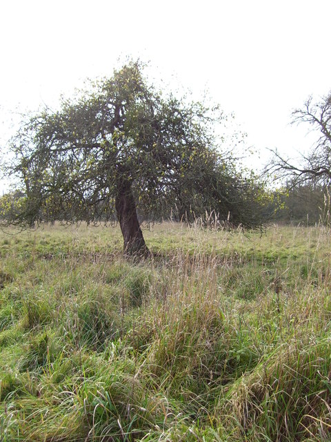 Old Orchard off Sneedhams Lane