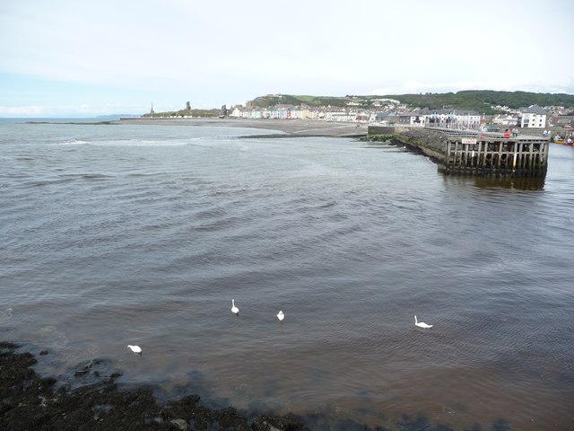 Swans off Aberystwyth