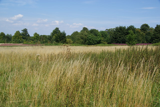 Nonsuch Park: where was Nonsuch Palace?