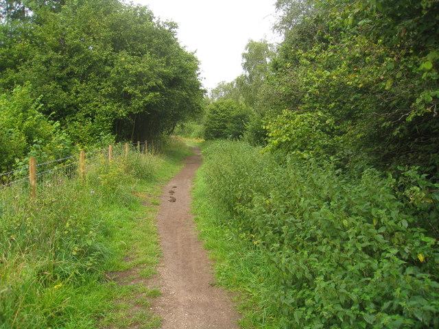 Path on Abbotstone Down