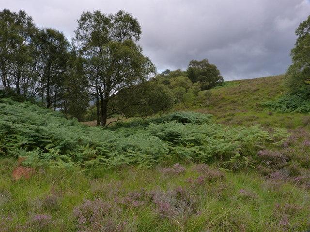 Hillside above Loch a' Chairn Bhain