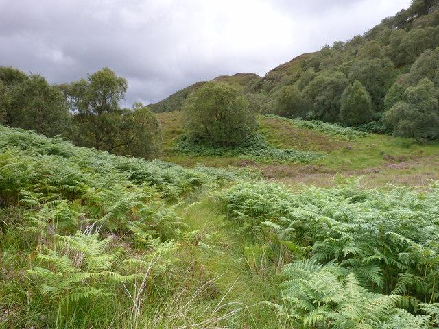 Woodland above Loch a' Chairn Bhain