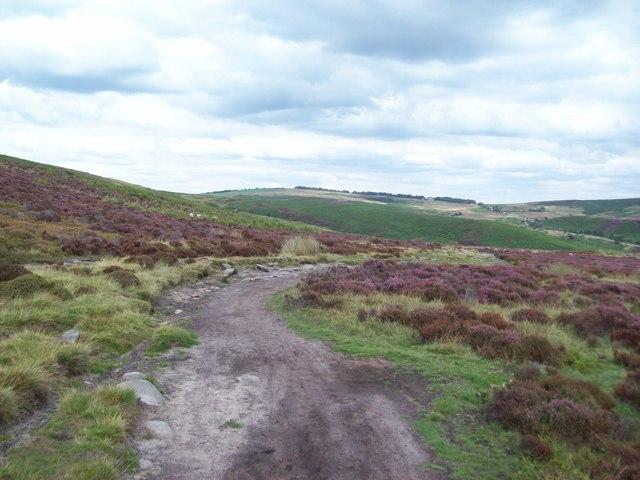 Bridleway on Derwent Moors
