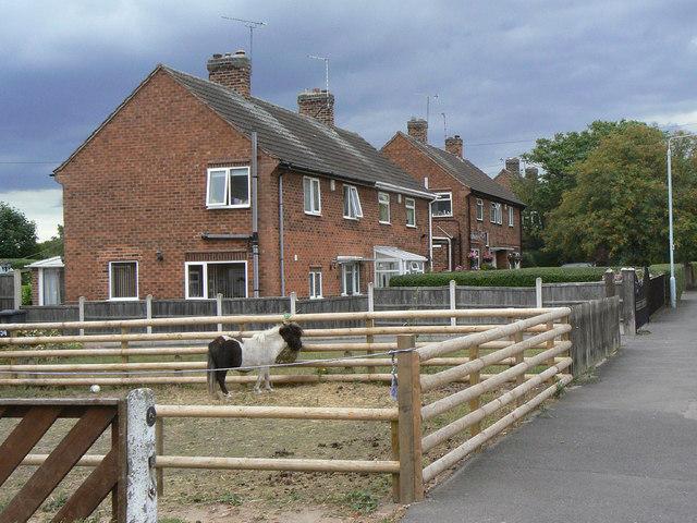 Mini-paddock for a mini-horse