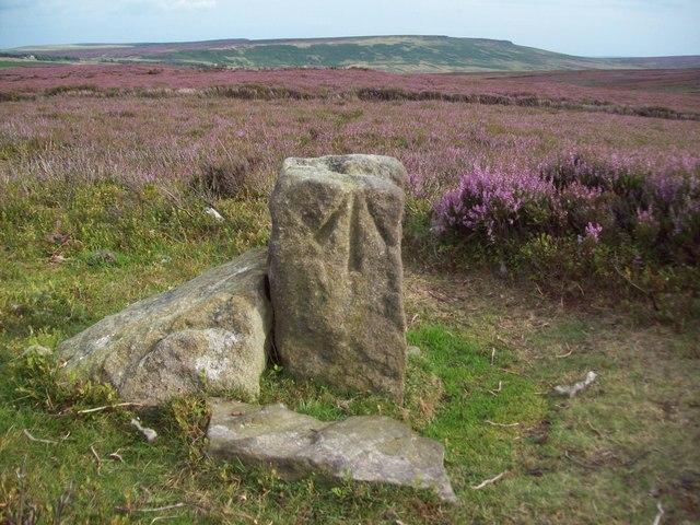 Benchmarked Boundary Stone on Strines Moor