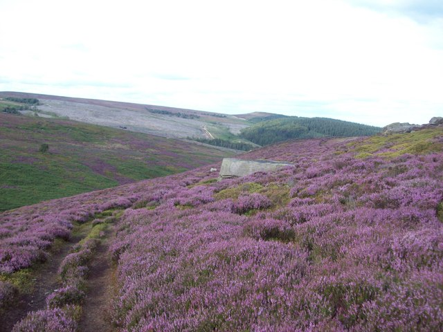 Track on Strines Moor Ridge