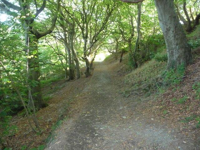 Woodland path in Parc Natur Penglais
