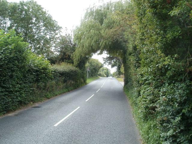 Tree canopy, Oldmixon Road, Hutton