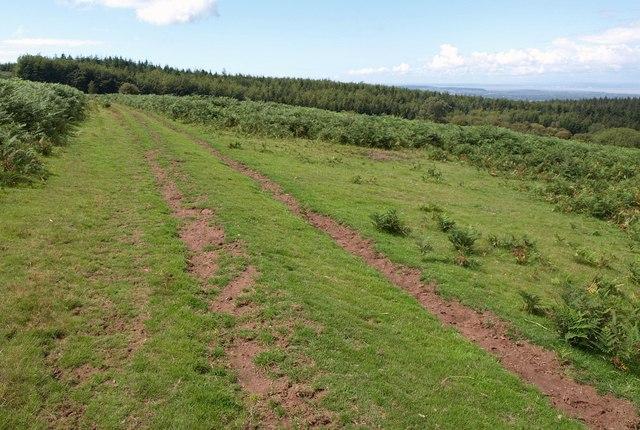 Track across Black Down
