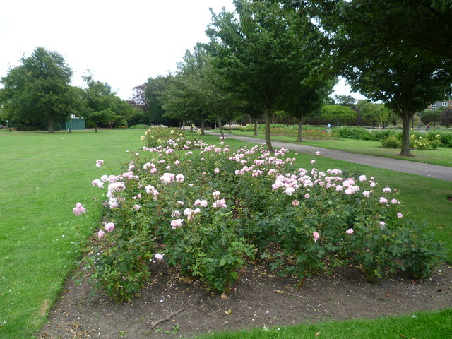 Roses in Lampton Park