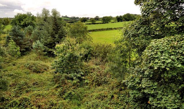 Old railway near Comber (1)