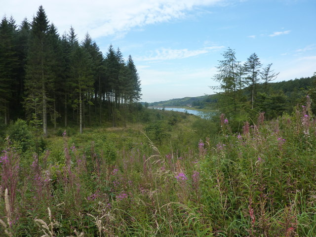 Ridgegate Reservoir and Rosebay Willowherb