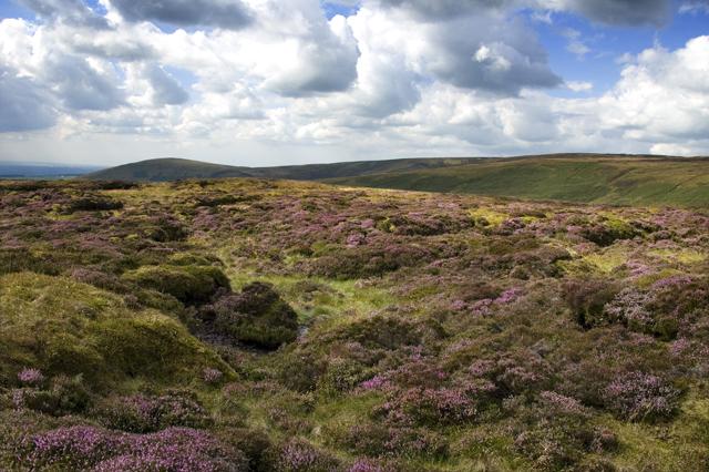 Heather Moor Burnslack Fell