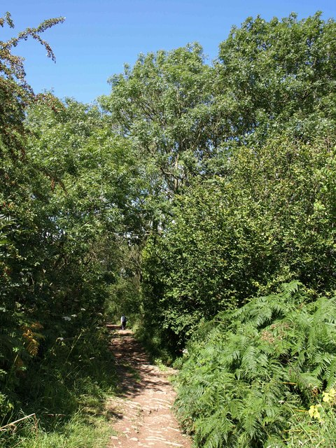 Bridleway to Burrington Combe