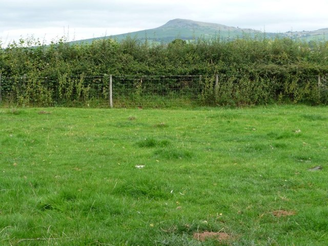 Hedge strengthened with a fence, with parallel footpath