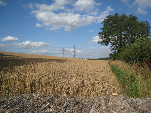 Wheatfield and pylons