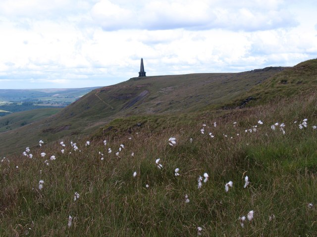 Cotton grass on the moor edge