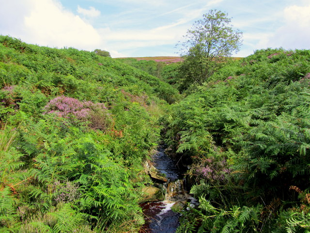 Great Agill Beck