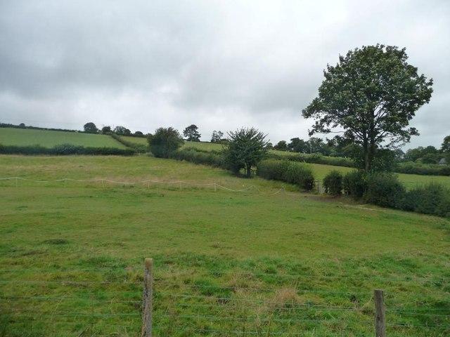 Hedgerow tree, near Glyn