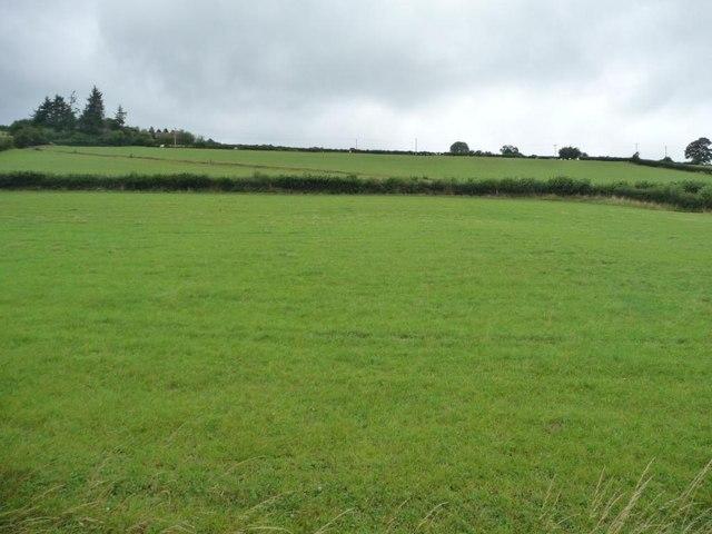 Grassy hillside, Y Golfa
