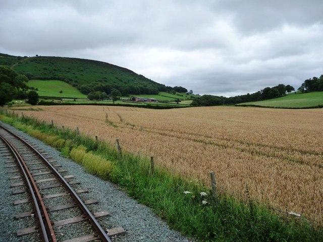 Wheatfield along the Sylfaen valley.