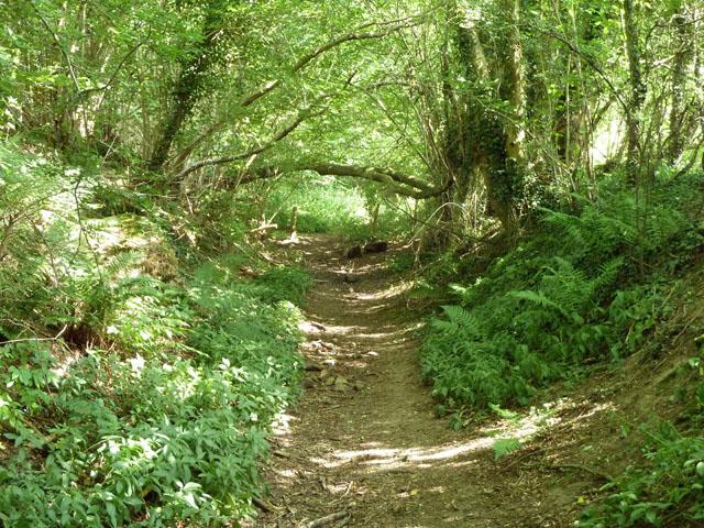 Footpath south of Manor Farm