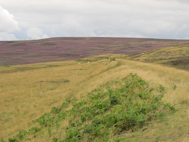 Embankment on the former Weardale & Rookhope Railway