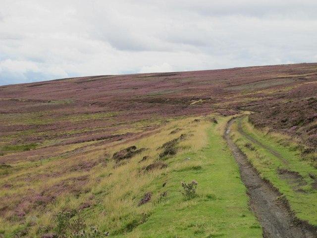 Trackbed of the former Weardale & Rookhope Railway below Horseshoe Hill