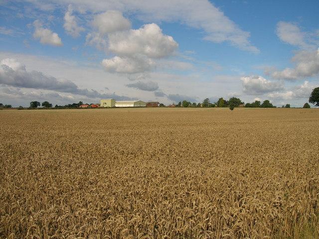 Farmland near Stillingfleet