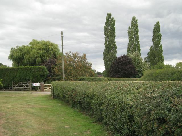 Ornamental trees near Hipsley Farm