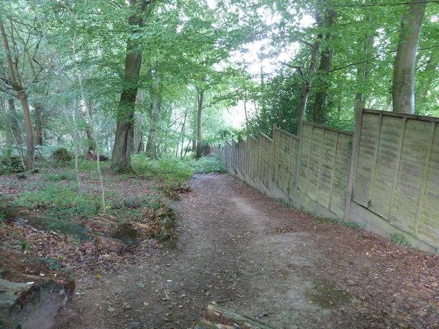 Steep climb in Hapstead Wood