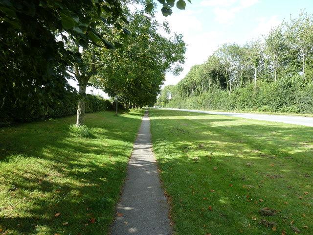 Shaded path alongside the Ardingly Showground