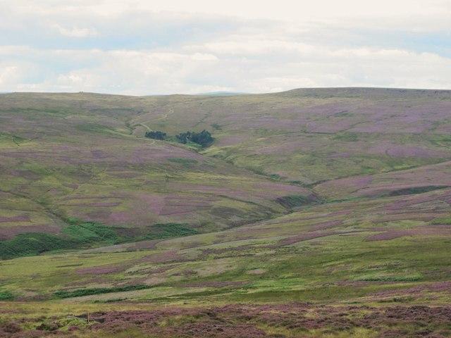 Moorland below Meadows Edge