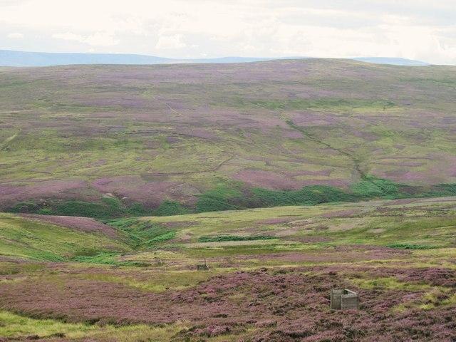Moorland below Meadows Edge (2)