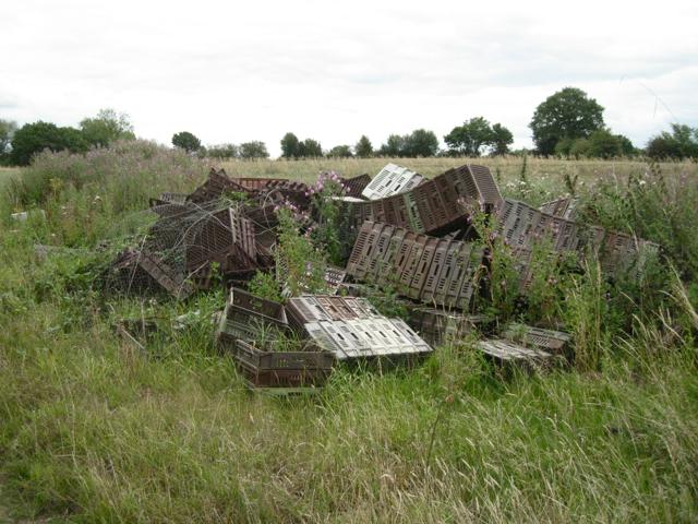 Discarded crop trays near Green Farm
