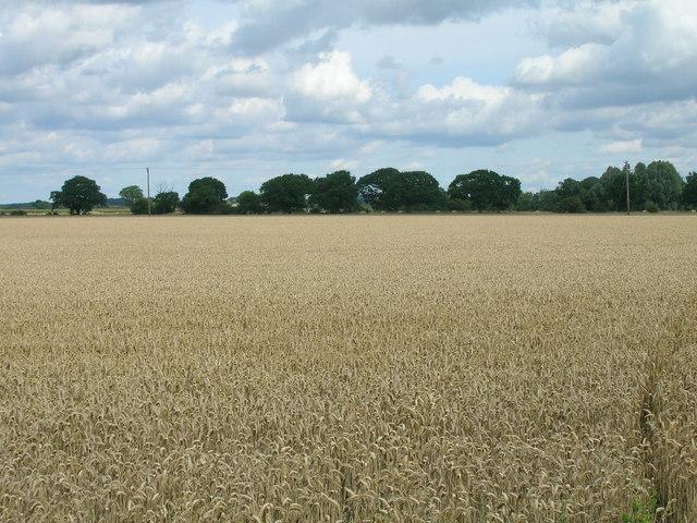 Farmland near North Duffield Lodge